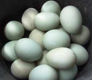 Manfaat Telur, Putih Telur, dan Kuning Telur